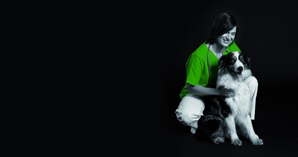 Slider Hund (Arbeiten bei Vetoquinol)